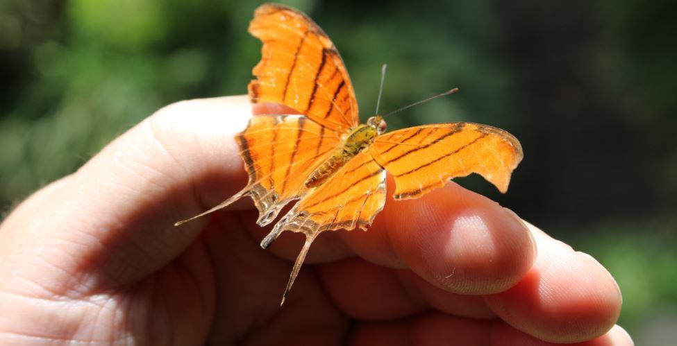 Edito du mois : effet papillon